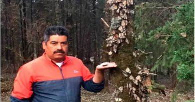 Homero Gómez gran activista a favor de la preservación del hábitat de la mariposa monarca